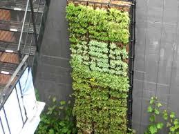 vertical garden eco vertical mur végétal youtube
