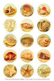 seashells digital collage sheet call me victorian