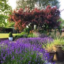 Flowering Privacy Shrubs - the 8 best perfect for privacy garden trees the middle sized