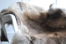 Reindeer Hide Rug Natural Reindeer Hide Medium The Swedish Wooden Horse Company