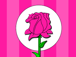 Pink Colour by Pink Flower