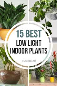 indoor plants that need no light 15 best low light indoor plants low lights plants and dark