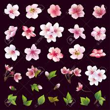 big set of different beautiful cherry tree flowers and leaves