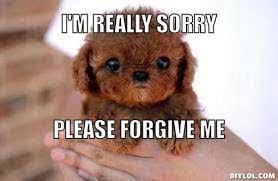 Memes Sorry - forgive me meme 28 images i m sorry forgive me im sorry
