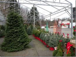 live christmas trees artifical vs live christmas trees jim jenkins lawn garden center