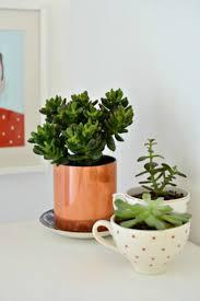 desk cactus best 25 copper planters ideas on pinterest wood design copper