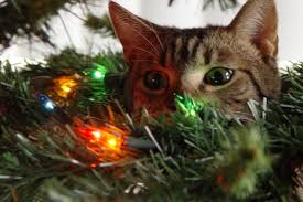 cat christmas these cats really christmas but it s still adorable