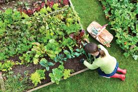 Make A Vegetable Garden by How To Make A Home Grown Veggie Patch Agrison