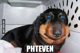Phteven Meme - phteven phteven tuna the dog know your meme