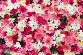 beautiful flowers images u0026 stock pictures royalty free beautiful
