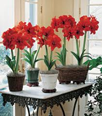 wonderful decoration flower bulbs flowering