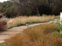 sideoats grama bouteloua curtipendula a grass found