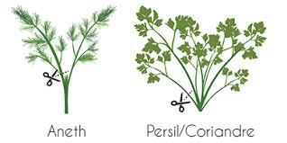 plante aromatique cuisine comment bien récolter les plantes aromatiques de votre jardin d