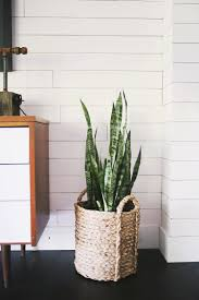 In House Plant Five Easy To Care For Houseplants U2013 A Beautiful Mess