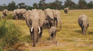 my day with jb family the elephants of amboseli capital