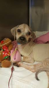 emaciated dog tossed out of moving vehicle in new jersey cbs philly