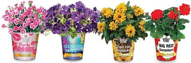 Home Depot Flower Projects - plants flowers u0026 edibles the home depot canada