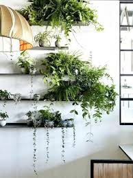 indoor plant display indoor plant shelf wall shelves for plants the new ivy muse store