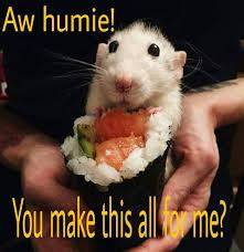 Rat Meme - rat meme a mischief of rats pinterest rats animal and