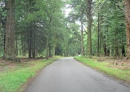 rhinefield ornamental drive stuart logan geograph britain and