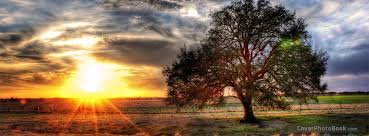 landscape tree cover nature