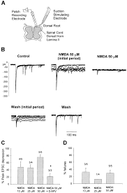 cr home design center rio circle decatur ga presynaptic nmda receptors modulate glutamate release from primary