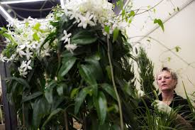 flower power at the garden show the seattle times