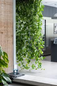 10 cool house plants to grow inside british gq