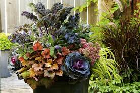 fall gardening ornamental kale and cabbage planter cabbage