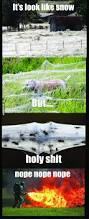 16 best no images on pinterest animals funny stuff and