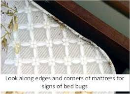 Bed Bugs On Mattress Controlling Bed Bugs By Hand Let U0027s Beat The Bed Bug