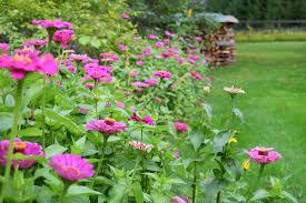 idee deco jardin japonais 1001 conseils et idées pour aménager son jardin comme un pro