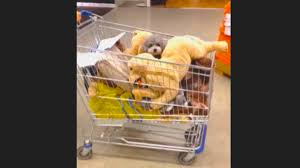 ikea dogs sneaking the poodle into ikea youtube