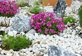 giardini rocciosi in ombra compo come e dove realizzare un giardino roccioso anche in terrazzo