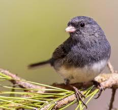 citizen science u2014 hsv audubon