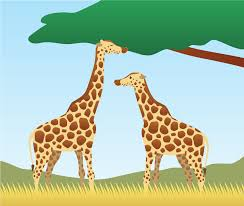 why do giraffes have long necks your ai friend that answers