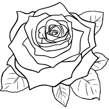 25 beautiful drawing of a rose ideas on pinterest pencil