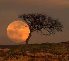 apod 2018 march 28 blue moon tree