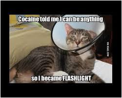Fleshlight Meme - simple fleshlight meme best they said i could be anything memes 80
