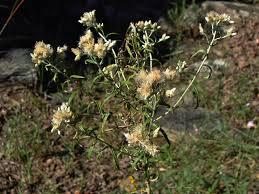 arkansas native plants current articles anps blog arkansas native plant society we