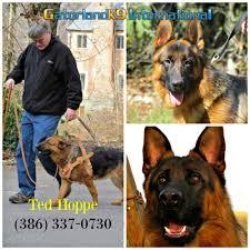 belgian shepherd louisiana protection dogs