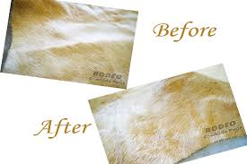 Calfskin Rug How To Remove Creases From Your Cowhide Rug U2013 Rodeo Cowhide Rugs