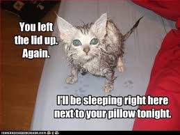 Wet Cat Meme - lolcats wet page 4 lol at funny cat memes funny cat pictures