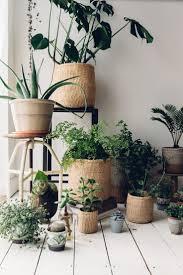 100 using plants in home decor best 10 plants in bedroom