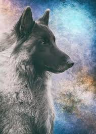 belgian sheepdog art top unusual cat breeds on earth to be anxiety and language