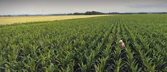 precision irrigation systems and solutions netafim