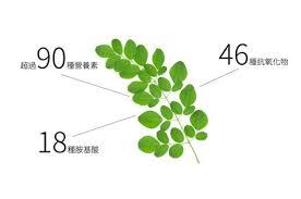 bureau de change la d馭ense les 15 meilleures images du tableau 辣木油moringa sur