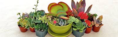 garden design garden design with succulent plants on pinterest