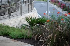 6 dependable ornamental grasses for commercial landscapes