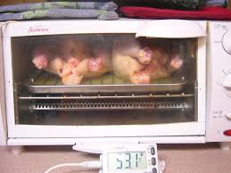 Sunbeam Oven Toaster Collegiate Meals Toaster Oven Cornish Hens 4 Steps With Pictures